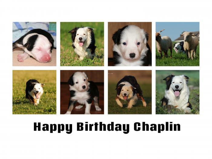 Geburtstag_Chaplin_2019.jpg